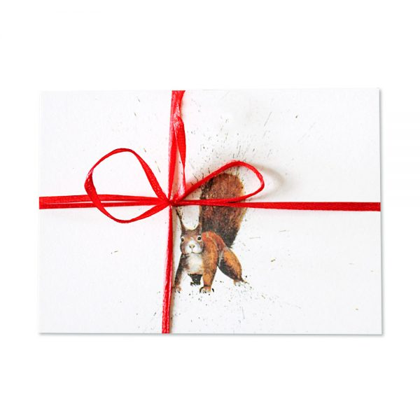 Red Squirrel Post Cards Pack Of 10