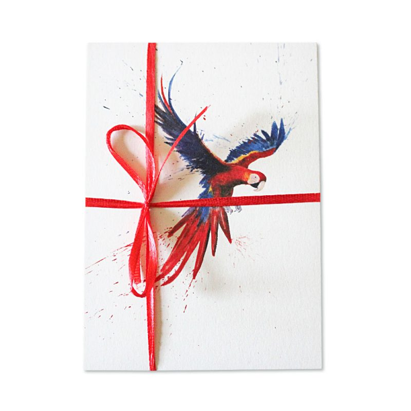 Scarlet Macaw Post Cards | Pack Of 10