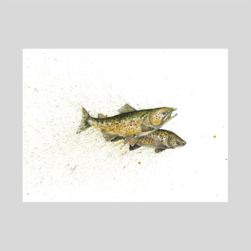 Brown Trout Duo