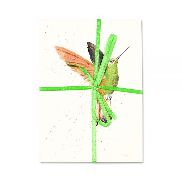 Hummingbird Post Cards Pack Of 10