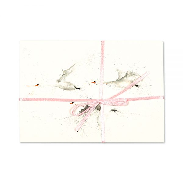 Swans Post Cards | Pack Of 10